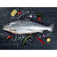 Cá hồi Úc giá sỉ Petuna Size 5-6kg (4 Con/Thùng)