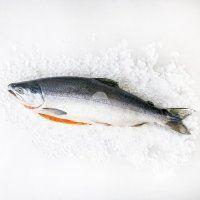 Cá hồi Nauy Ocean Quality size 5-6kg (21-23kg/Thùng)