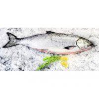 Cá hồi Úc Tassal size 5-6kg (21-23kg/Thùng)
