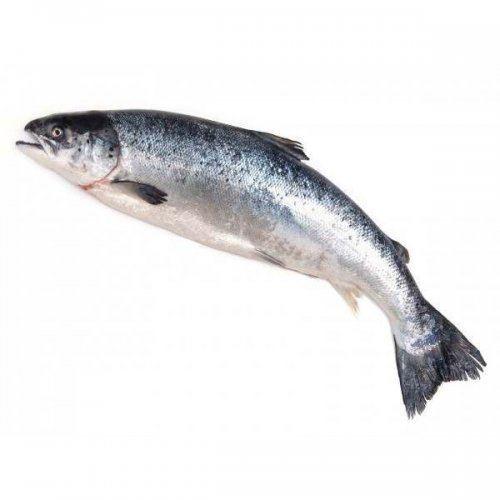 Cá hồi Nauy SALMAR size 5-6kg (21-23kg/Thùng)