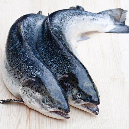 Cá hồi Úc Tassal size 6-7kg (19-21kg/Thùng)