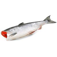 Cá hồi đông lạnh không đầu Nauy